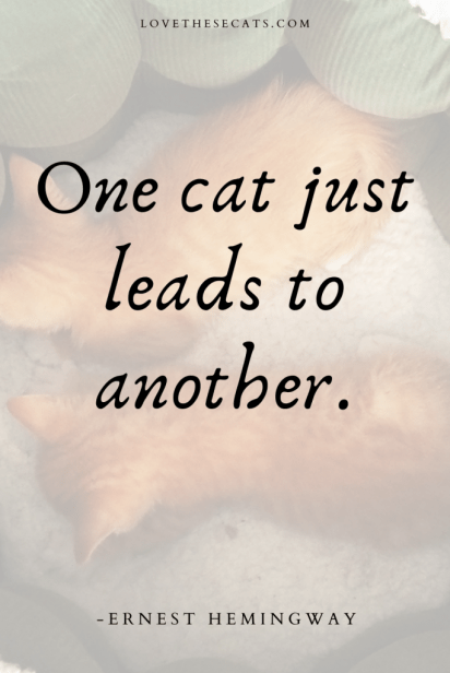 """""""One cat just leads to another"""" -Ernest Hemingway"""