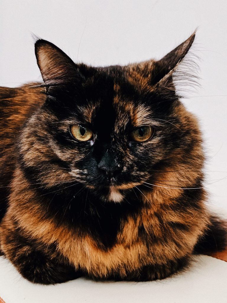 A cat with a black and orange fur pattern is called a tortoiseshell cat.