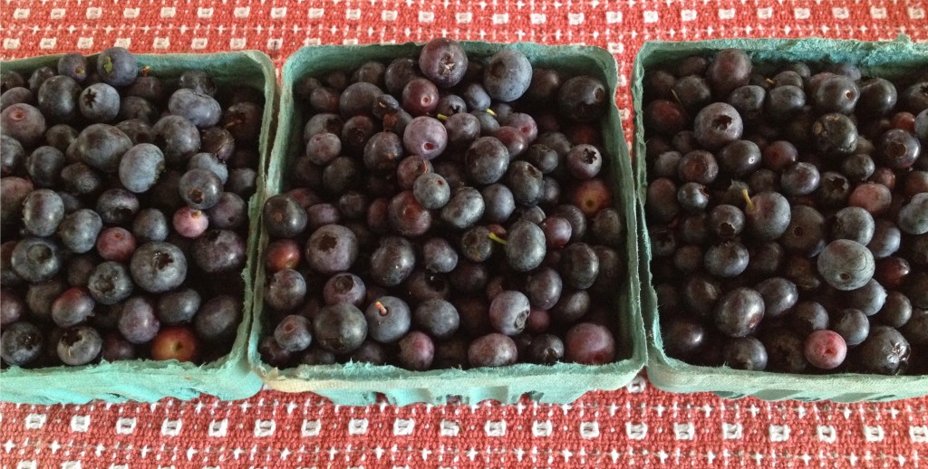 Locally grown blueberries in cartons.