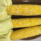 Corn on the cob on a plate ready to eat.