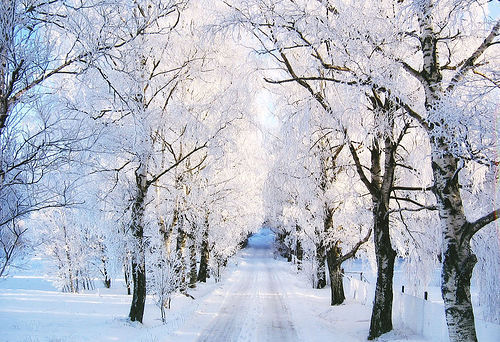 Frozen Winter Trees Pictures, Photos, And Images For
