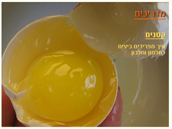 איך מפרידים ביצה