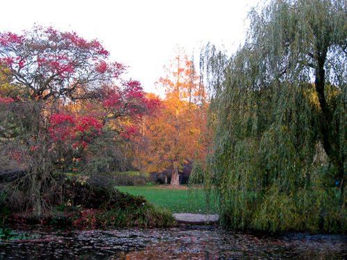 Seasonal colors at Isabella Plantation, Richmond Park, London - © L. Silberstein