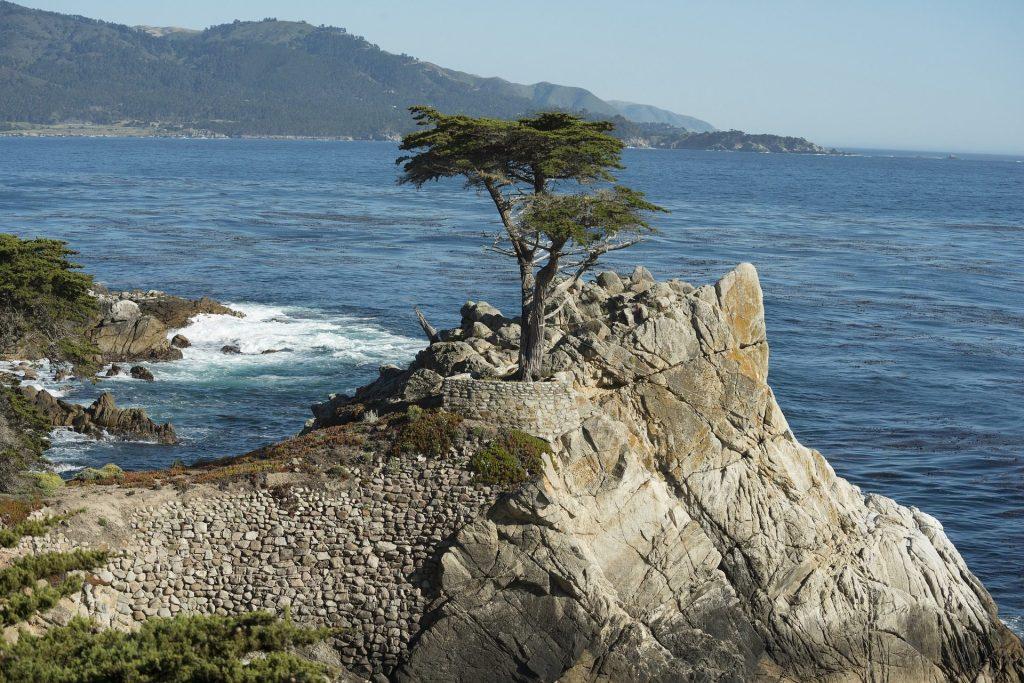 Lone Cypress Tree, Monterey, CA