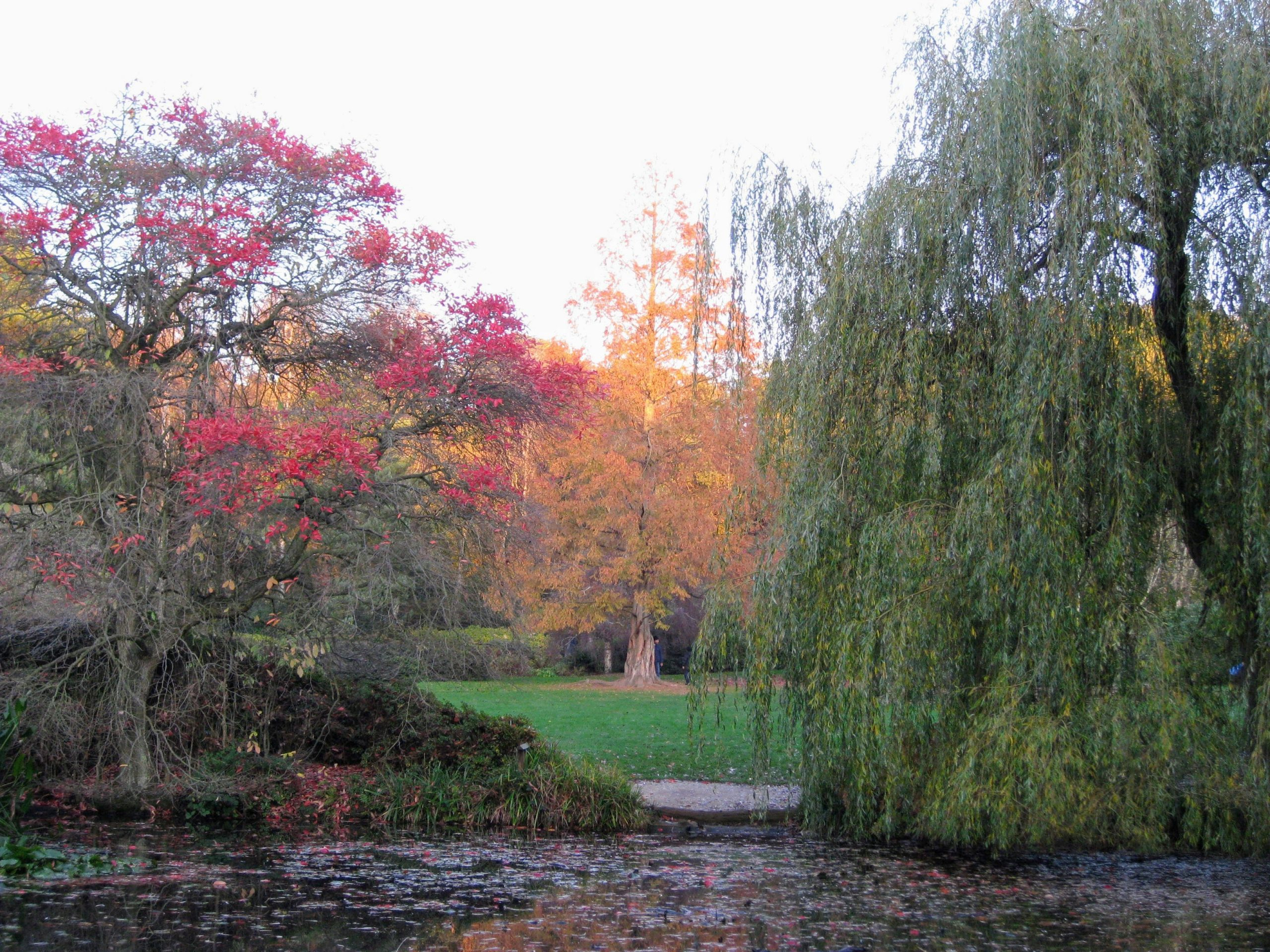 Isabella Plantation in Richmond Park, London