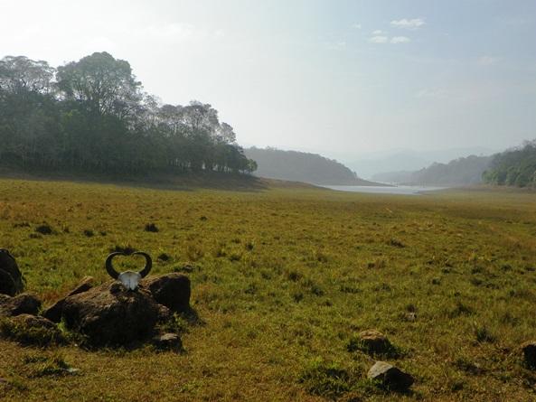 """Южная Индия. Национальный парк """"Перияр"""""""