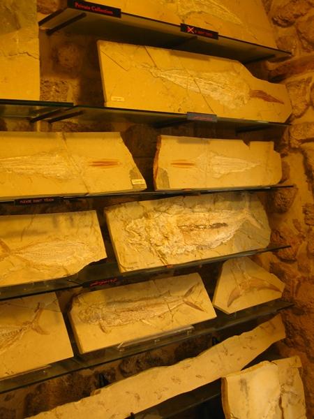 Библос. Музей морских ископаемых