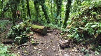 Cerro Chato Trail (22)