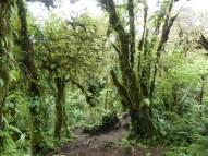 Cerro Chato Trail (31)
