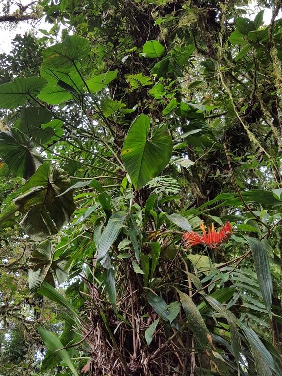 Monteverde (2)