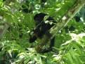 Caribbean wildlife (4)