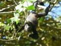 Caribbean wildlife (7)