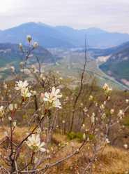 Love Trentino - vista da Castel Sajori