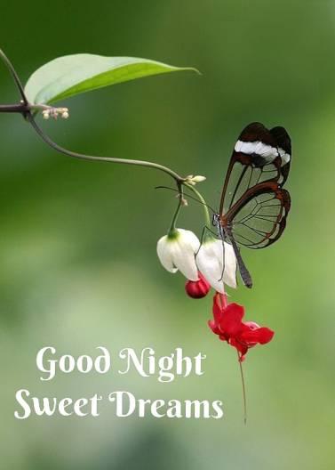 sweet-dreams-good-night-images-238-www.LoveVidStatus.com