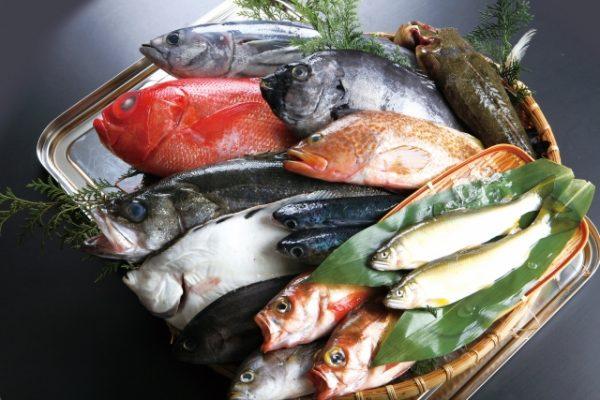 刺身 生魚 適量 おすすめ