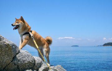 海苔 青のり 結石 注意点
