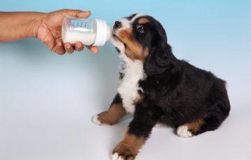 犬 牛乳 適量 アレルギー