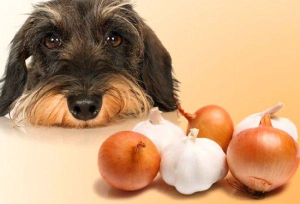 犬 玉ねぎ におい 処置