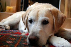 犬種 病気 予防策 まとめ