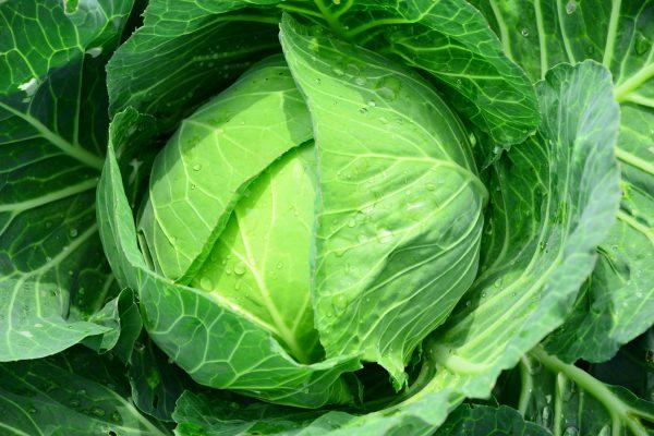 野菜 下痢 毒性 結石