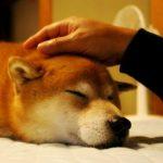 シニア 保険 犬