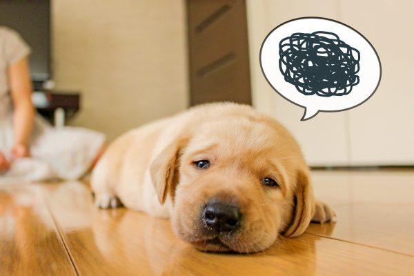犬 シャンプー 石鹸
