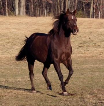 Horses - LoveWay