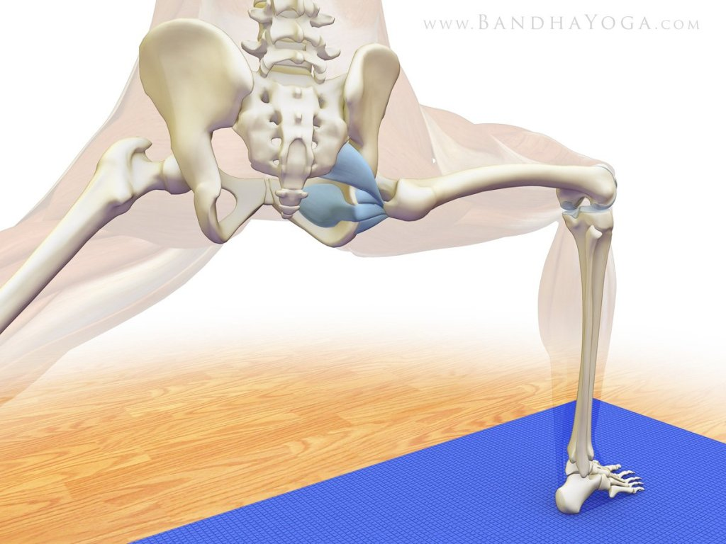 Figure 5: Activating the deep external rotators of the hip in Warrior II.