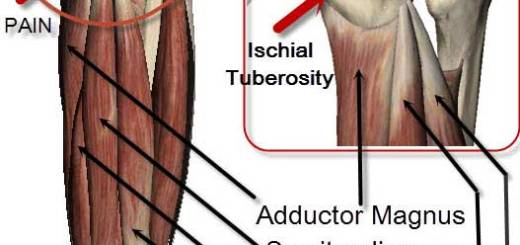 Sitbone Pain from Yoga Asana | Love Yoga Anatomy