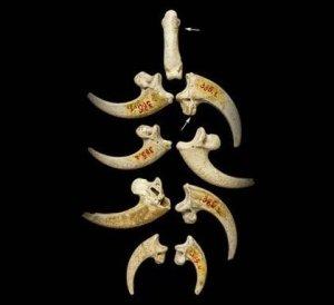 worlds oldest jewellery