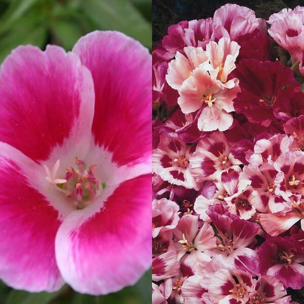 Яркий наряд истинной цветочной леди годеции