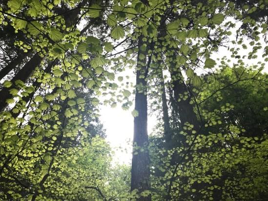 fav tree