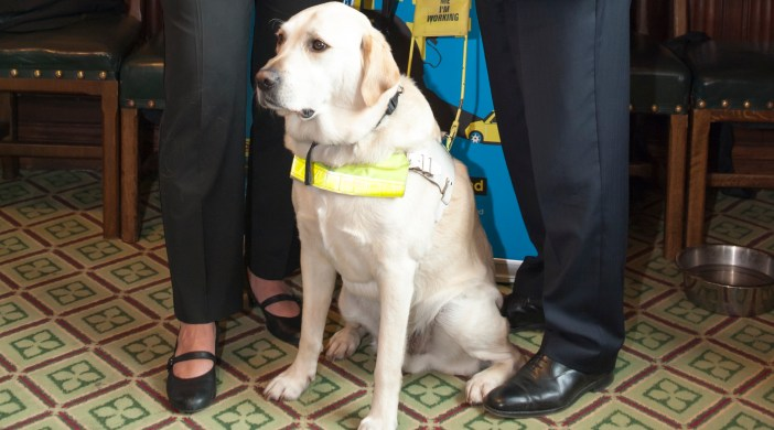 Guide Dogs parliamentary reception (supplied pic)