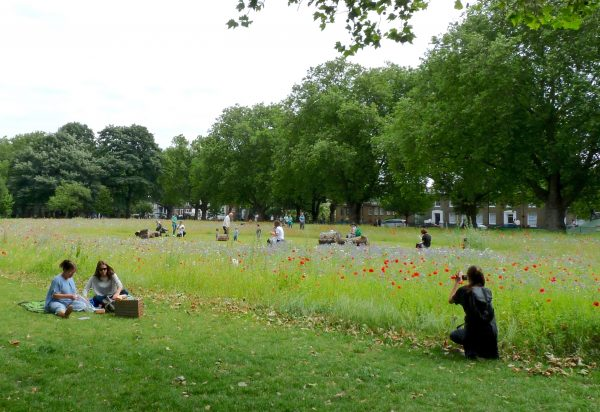 Lon FieldsWild: London Fields Hackney wildflower patch / meadow 090716 © david.altheer@gmail.com