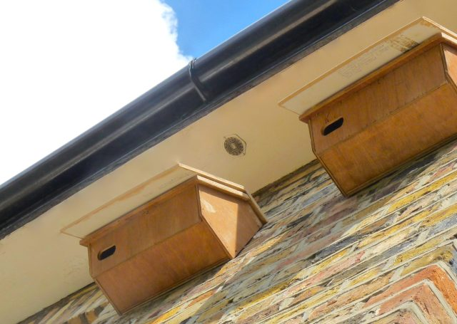 Swifts: nests erected @ rear of Cecilia Road, Dalston E8 house by KC Construction Services 0800 002 9576 44 Iveagh Close Victoria Pk Lon E9 7BW © david.altheer@gmail.com