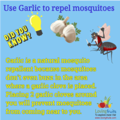 garlic mosquito barrier