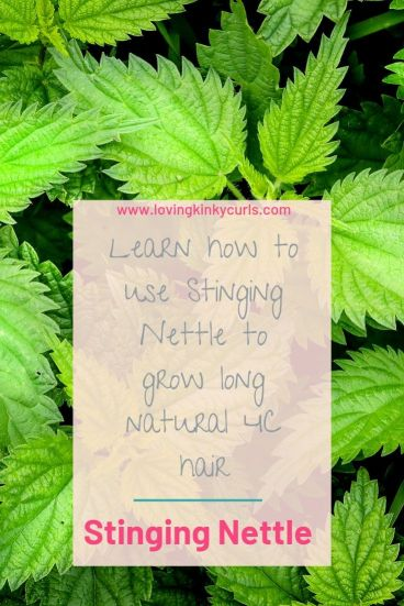 Stinging nettle for natural hair growth