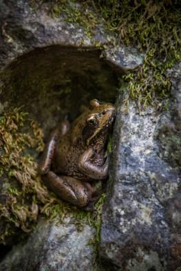 Frog Bridal Veils State Park-19417820390