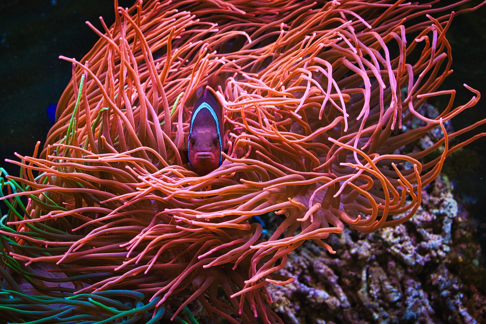 coral-reef-fish