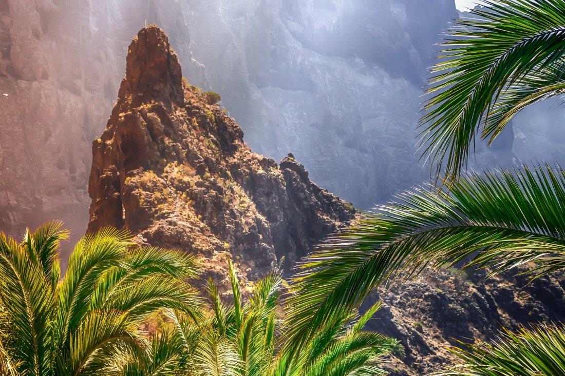 Canary-Island-forest