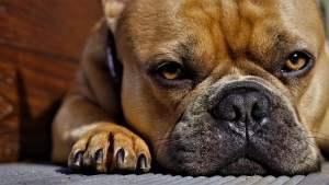 De neus van een hond