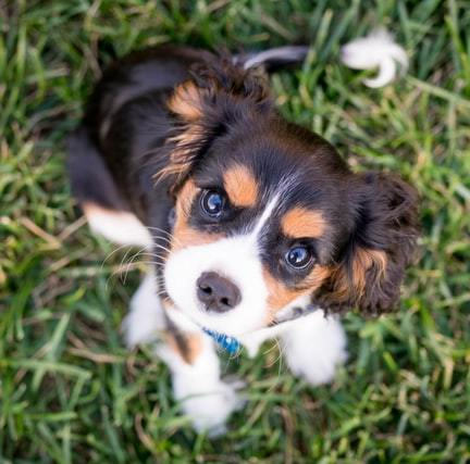 Zidelijkheidstraining puppy