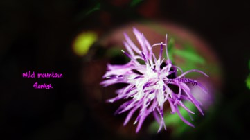 wildflower - just had to play with some filters on this one