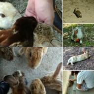 More bunnies!