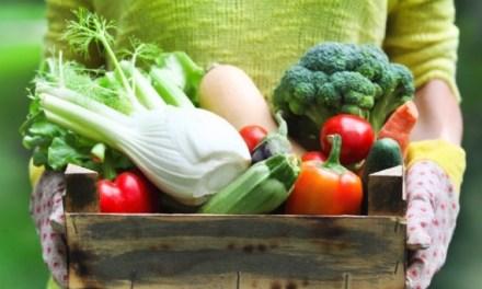 Fibras alimentares para o seu intestino