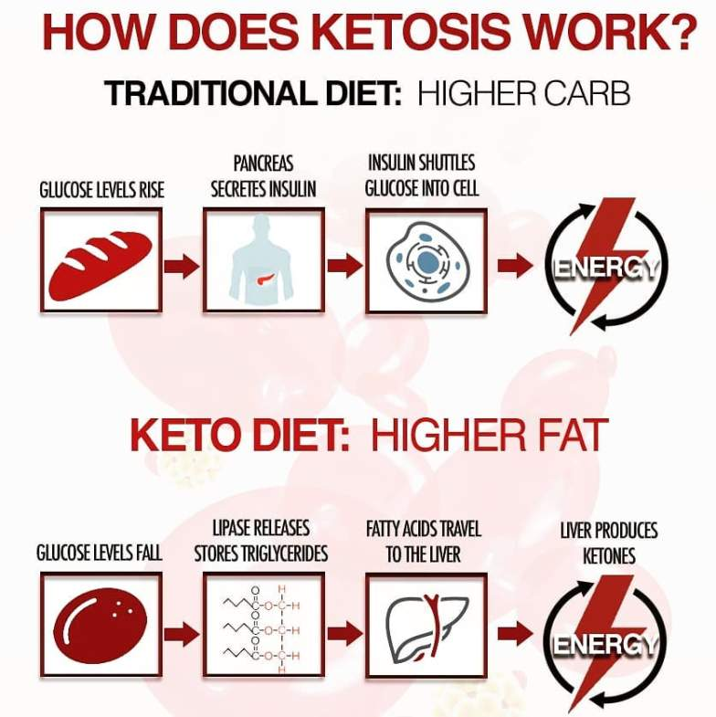 step by step guide to ketogenic diet
