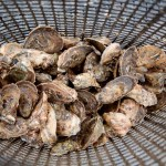 Aw Shucks! It's Time for Oysters in the Lowcountry