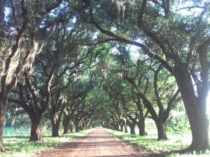 Louisiana Evergreen Plantation Avenue of Oaks