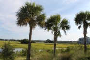 The SC Low Country is beautiful!