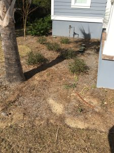 Charleston SC Landscape Designer Before James Island